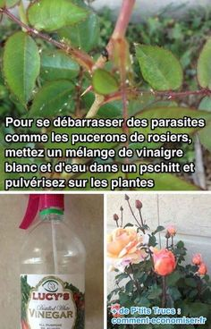 The Natural Insecticide Que - Wood Decora la Maison Potager Garden, Garden Pests, Balcony Garden, Herb Garden, Vegetable Garden, Garden Landscaping, Garden Tools, Fall Vegetables To Plant, Natural Insecticide