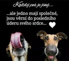 Belgian Malinois, Motto, Dogs, Animals, Animal Pictures, Animales, Malinois Dog, Animaux, Pet Dogs