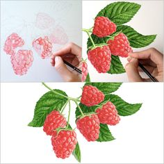 Pick your own to paint! Watercolor Fruit, Watercolor Pencils, Watercolor Flowers, Watercolor Paintings, Watercolors, Flower Paintings, Acrylic Painting Flowers, Acrylic Painting Techniques, Botanical Flowers