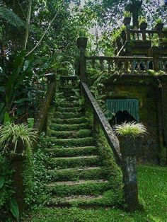 Oh, how I wish our yard could look like this!!  So much green!!