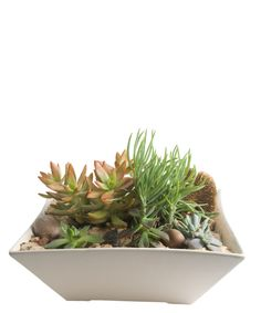 Deluxe Modern Succulent Garden