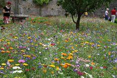 bluetenmeer-im-klostergarten.jpg 1.000×667 Pixel
