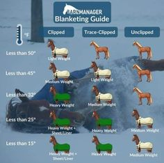 Horse Care Tips, Horse Farms, Horses, Instagram, Horse Stuff, Barn, Camping, Health, Campsite