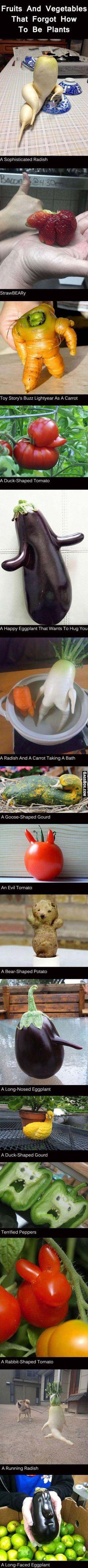 They Forgot How To Vegetable - #funny, #lol, #fun, #humor, #comics, #meme, #gag, #lolpics, #funnypics,