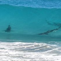 Sharks Shut Down Florida Beaches   Ahhh!!! This is why I will always be scared of the ocean!