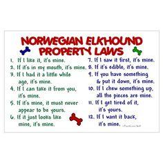 Norwegian Elkhound Property Laws 2 Pri Poster