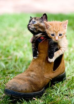 Cute kittens in a boot