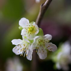 Blossoms   #Worldprime  #spring  #beautiful  #enchanting  #upclose  #photoart  #Blooms  #saturation  #naturelovers  #wanderlust  #flower   #stamen  #Capture #peaceful  #serenity   #Moody  #pretty  #capture   #perspective  #photographer  #Exposure  #Outdoor  #contrast  #Photography  #Nature  #wonder  #flower  #color  #Light  #composition