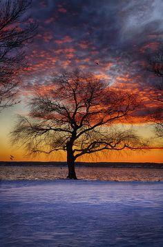 ✯ Seneca Sunset