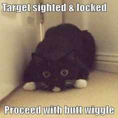 Great... Funny Cat Photos Free #superb