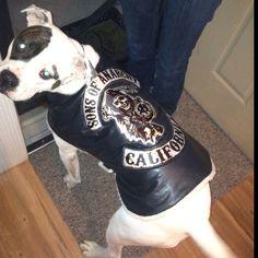 My American Bulldog Jax rocking his custom made Sons Of Anarchy jacket