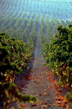 Pinnen är för inspiration. Jag brygger mitt eget vin från vinsatser och då och då från djupfryst eller färsk frukt. Wine Cellar Design, Order Wine Online, Weekend House, Wine Subscription, Expensive Wine, Wine Wednesday, Cheap Wine, Wine Delivery, Cabernet Sauvignon