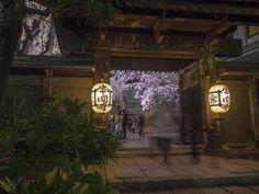 https://flic.kr/p/rVYgvF | a temple with cherry trees | OLYMPUS OM-D E-M1, LUMIX G VARIO 7-14mm/F4.0 ASPH.  常圓寺 / Joen-ji www.joenji.jp/