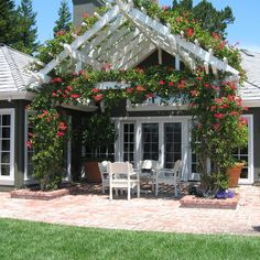 Patio Rose Trellis