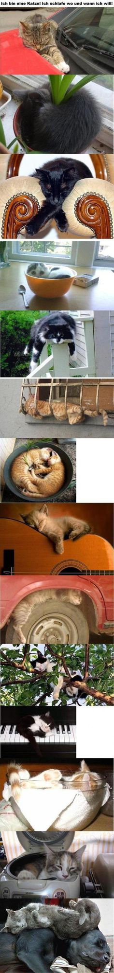 "I...I don't know what the caption says, but the language for ""Squee!  Kittehs sleeping in silly places!"" is universal."