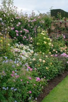 21 Mind-Blowingly Beautiful Roses : Michael Marriott, senior rosarian of David Austin Roses in Shropshire, England, shares his top tips for designing rose beds, borders and gardens. HGTV Gardens shares a gallery of 21 gorgeous roses. Rosas David Austin, David Austin Rosen, Garden Shrubs, Shade Garden, Garden Pond, Garden Tips, Beautiful Roses, Beautiful Gardens, Beautiful Beds
