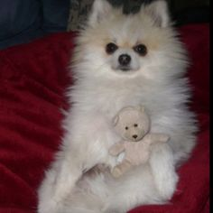 Just chilling with my Teddy!