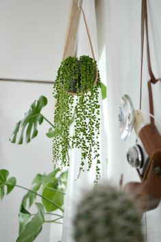 amazing green plants! Urban Jungle Bloggers: Plants & Glass