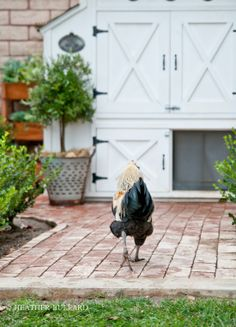 Interview: Heather Bullard from Country Living Magazine talks about her Chickens and Chez Poulet
