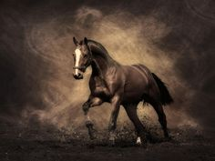 Un cheval bai au galop