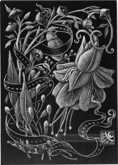 Cynthia Emerlye, Vermont artist and kirigami papercutter: Fuchsia - Black Clayboard Engraving ( Scratchboard )