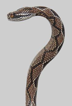 Wood Carved Rattlesnake Walking Cane by Mike Stinnett
