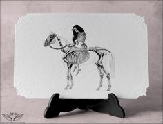 Victorian Cards Skeleton Horse Lady Godiva 5 Cards and Envelopes A Great Gift. $8.00, via Etsy.