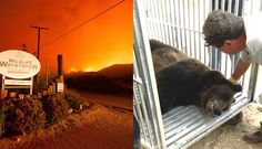 People rush to save 400 scared animals from deadly wildfire! For the love of animals. Pass it on.