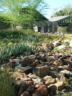 stunning South African indigenous landscaping #landscapingwithrocks