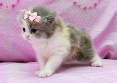 Pinky on pink - Cats Wallpaper 1175257 - Desktop Nexus Animals  Gotta have her. ^..^