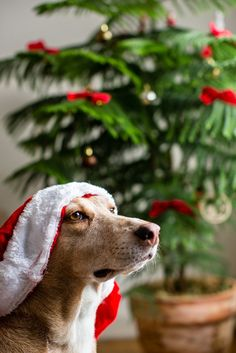 Holiday headquarters for pets http://www.pawsforreaction.com/christmas-holiday-headlines.html