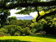 Incredible view of Diamondhead from one of the gardens at Spalding House Museum.