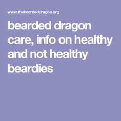 bearded dragon care, info on healthy and not healthy beardies, setting up cage, lighting, heat