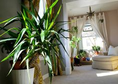 Love tons of plants in the master bedroom