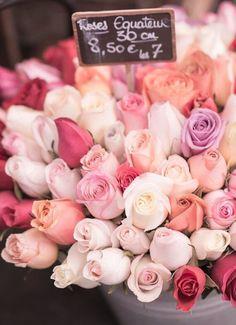Paris Rose photograph from Etsy Georgiana Lane