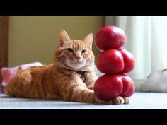 Holding up a tomato tower is so easy that this feline can do it in his sleep. No, seriously. He really is sleeping.