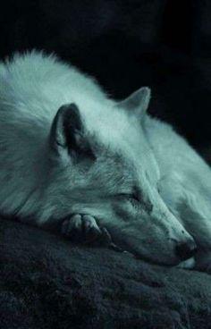 Wolf Love, Wolf Spirit, Spirit Animal, Beautiful Creatures, Animals Beautiful, Sleeping Wolf, Tier Wolf, Animals And Pets, Cute Animals