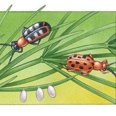 Organic Pest Control Series: Common Garden Pests and how to get rid of them.