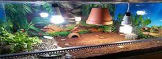 Terária na prodej | euzelva.cz Aquarium, Goldfish Bowl, Aquarium Fish Tank, Aquarius, Fish Tank