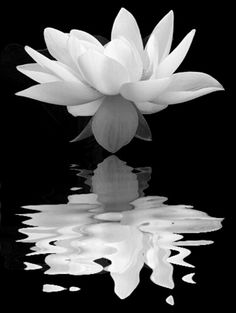 Lotus, my favorite smell and flower. My next project for an indoor water garden.