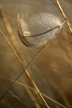 I also have some great photos from the rest of that day coming. Feather In The Wind Foto Gif, Wabi Sabi, Bird Feathers, Feather Art, Photos, Pictures, Ethereal, Serenity, Dandelion