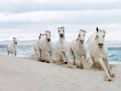 Zero Creatives/cultura/Corbis - Horses on the beach