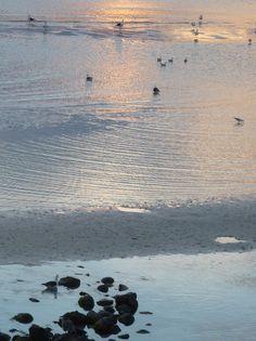 sally curry   evening gulls