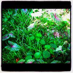 A green part earth