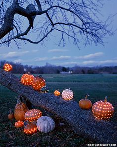 Place Lighted Pumpkins anywhere outdoors with battery operated mini lights. Love it!(Several sets per pumpkin)