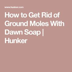 How to Get Rid of Ground Moles With Dawn Soap | Hunker