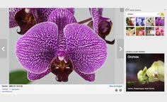 Yahoo'nun arama motoru pazarındaki hızlı gerilemesi artık herkes tarafından bilinen bir gerçek. Şimdi bu gerilemenin başladı yıllara geri dönüp, Yahoo'nun şirket satın aldığı yıllara döneceğiz.    Yavaş yavaş tahtını Google'a kaptırmaya başlayan Yahoo, 2005 yılında dönemin en popüler fotoğraf paylaşma platformlarından biri olan Flickr'ı satın aldı. Bu satın alma anlaşmasıyla telaffuz edilen rakam ise 35 milyon dolar civarındaydı.