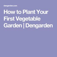 How to Plant Your First Vegetable Garden | Dengarden