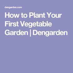 How to Plant Your First Vegetable Garden | Dengarden