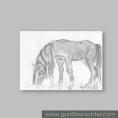 Daily Drawing 12 - ACEO horse sketch